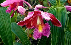 Wild-orchids-in-Machu-Picchu